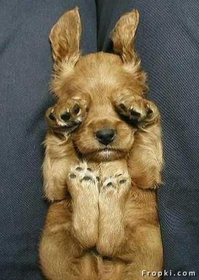 Woosey-dog